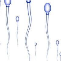 живот на спермата