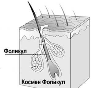 фоликул в яйчника, щитовидна жлеза, космен и лимфен