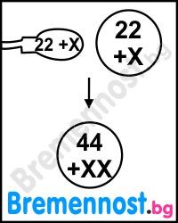 Една яйцеклетка е оплодена от сперматозоид с хромозома X.