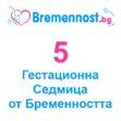 5 Седмица от Бременността