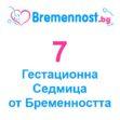 7 Седмица от Бременността