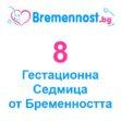 8 Седмица от бременността