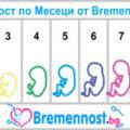 бременност по месеци от 1 до 9 месец