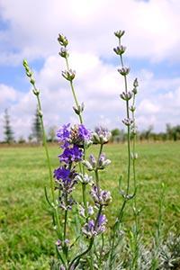 видове билки за забременяване и зачеване