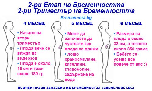 втори етап на бременността