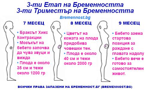 трети етап на брменността