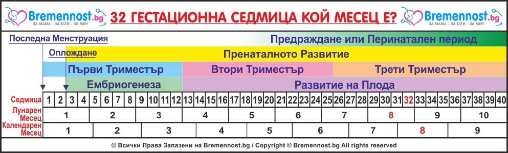 32 гестационна седмица кой месец е