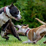 кучета с бяс