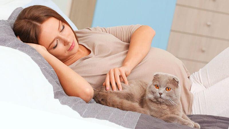 бременна жена с глисти лежи в леглото с котка