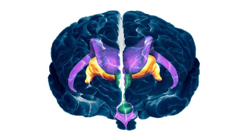 мозъкът освобождава хормони на 4 ден от менструалния цикъл